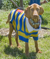 dog wearing striped polo