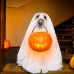 Get The Most Out Of Your Bulk T Shirts With These 12 Pawfect DIY Dog Costumes for Halloween